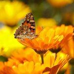 Seu Potencial blog Mariando